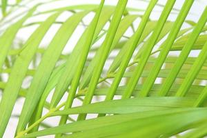 Close-up of bright green leaves photo