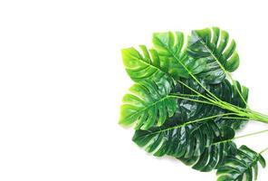 Group of monstera palm leaves photo