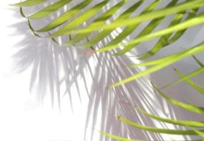 Palm leaves and shadows photo