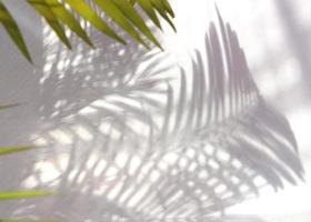 Green palm leaves and shadows photo