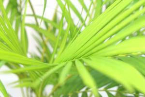 primer plano de hojas tropicales foto