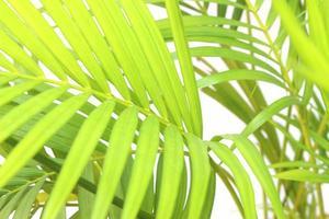 Vibrant green palm leaves photo