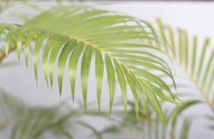 planta de hoja de palma tropical foto