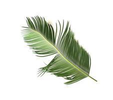 Lush tropical palm leaf