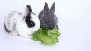 Two baby rabbit eating vegetable