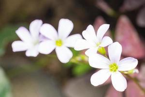 primer plano de flores blancas foto