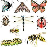 Gran conjunto de insectos acuarela sobre un fondo blanco aislado vector