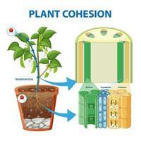 diagrama que muestra la cohesión vegetal vector
