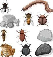 Different types of insect with nature elements vector