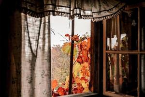 Beautiful shot of an autumn view from a window