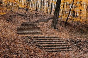 Beautiful shot of an autumn park