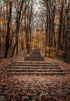 Stone stairs covered with autumn leaves