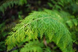 Green fern in the woods