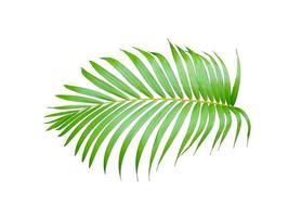 follaje de palmera tropical verde