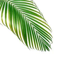 Palm leaf with yellow spots