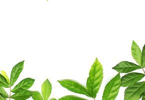 hojas verdes en la parte inferior del marco