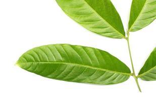 Vibrant green leaves on stem