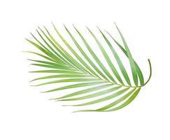 Lush bright green palm leaf photo
