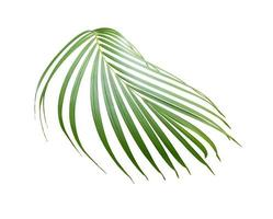 Branch of palm leaves photo