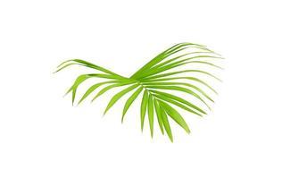 vibrante follaje de palmera verde brillante