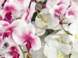 Floral shop orchids photo