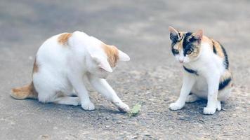 deux chats jouant avec une mante religieuse video