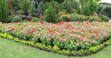 cama de flores rojas y rosadas