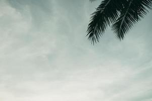 Coconut tree gardens in Thailand photo