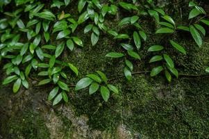 Small green trees that cover the ground photo