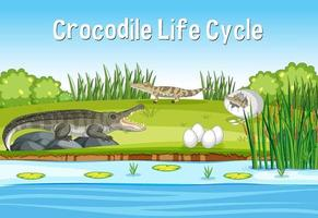 Scene with Crocodie Life Cycle vector
