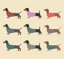 Set of Dachshunds wearing clothes. Vector illustration.