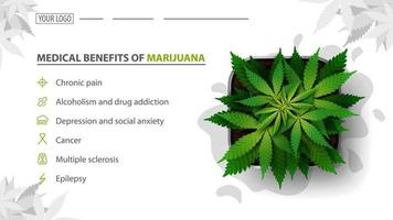 Medical benefits of marijuana, white banner for website with bush of cannabis in a pot, top view. vector