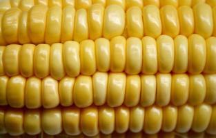 primer plano, de, granos de maíz