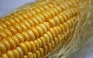 primer plano de la mazorca de maíz