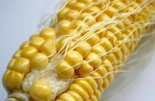 primer plano de maíz fresco