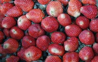 buch de fresas