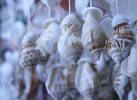 Group of hanging seashells
