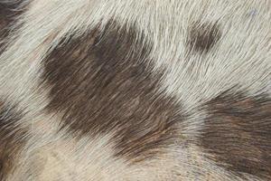 Close-up of pig fur