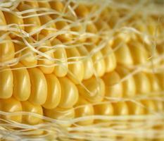 primer plano, de, maíz y seda