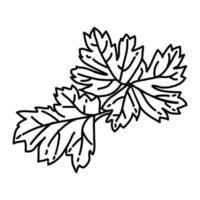 icono de perejil. Doodle dibujado a mano o estilo de icono de contorno vector