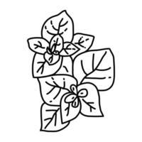 icono de orégano. Doodle dibujado a mano o estilo de icono de contorno vector
