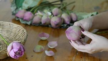 menina dobrando lótus rosa felizmente