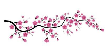 Sakura Flower Isolated on White Background vector