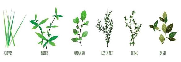 Herb illustration of chives, mints, oregano, rosemary, basil and thyme vector illustration.