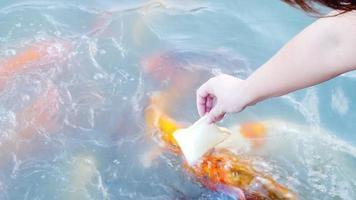 senhora alimentando carpa peixes