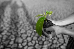 niño sosteniendo plántulas en tierra seca