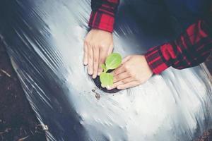 mano de mujer joven plantando un árbol joven en suelo negro foto