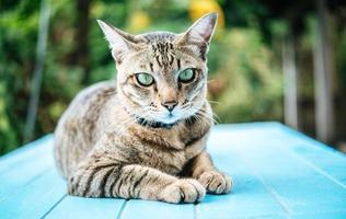 Eyes of the tabby cat photo