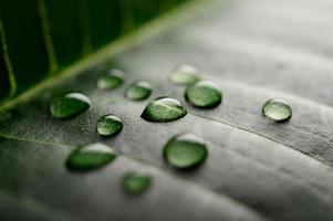muchas gotas de agua cayendo sobre las hojas foto