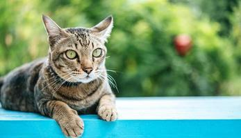 The eyes of a striped cat on a blue ledge photo